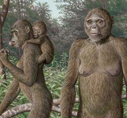 Paleoartist reconstruction of the 4.4 million year old human ancestor, Ardipithecus ramidus standing in its natural habitat
