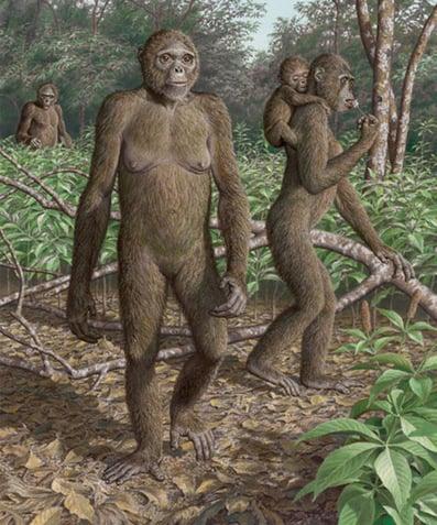 Reconstruction artistique d'Ardipithecus ramidus dans son habitat naturel il y a 4.4 millions d'années