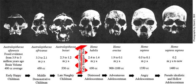 A series of seven human fossil skulls arranged in order of increasing brain case size and corresponding species maturation.