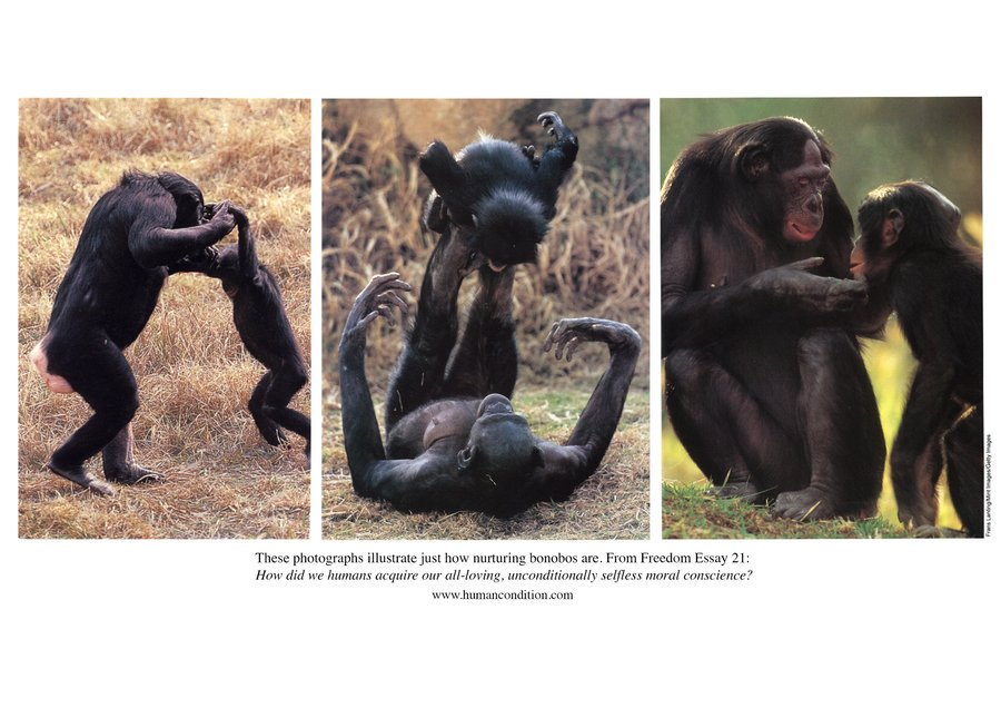 Bonobos nurturing and playing with their babies