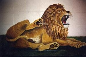 Lion roaring with thorn in foot